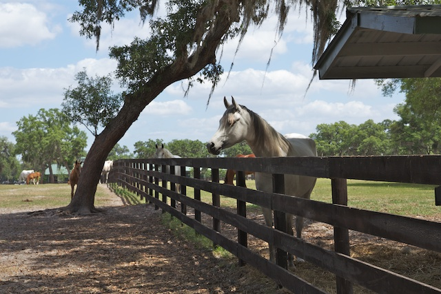 Ocala Horse ranch