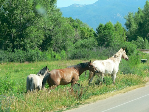 Wild horses outside Taos