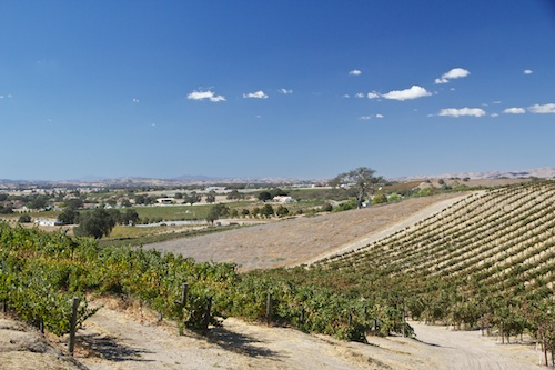 Miles of Vines in Paso Robles