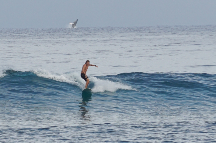 The surfer and the humpback